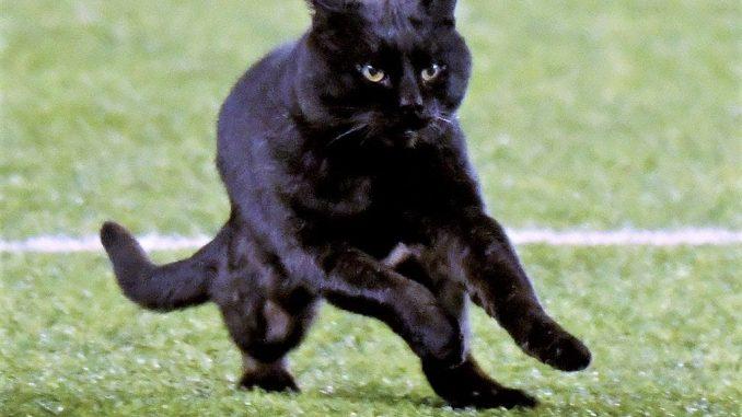 black cat still loose metlife
